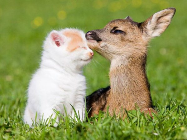 01-Cat-Deer-Animals-In-Love
