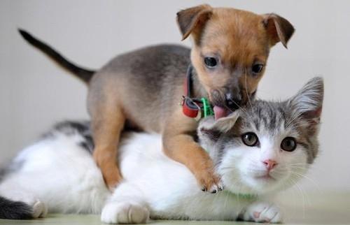 affection-animal-animal-love-animals-cat-cats-Favim.com-40393