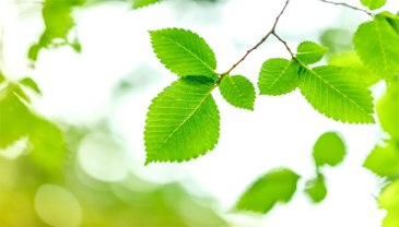 392662-artificial-leaf